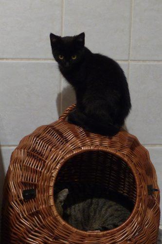 Natürlich findet auch dieses Jahr das traditionelle Voigtsdorfer Katzenwiegen statt!